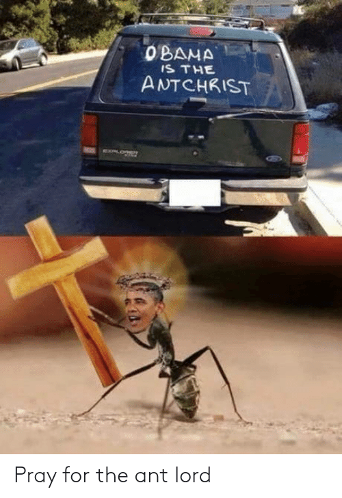ant: Pray for the ant lord