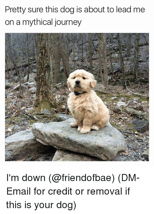 Mythic: Pretty sure this dog is about to lead me  on a mythical journey I'm down (@friendofbae) (DM-Email for credit or removal if this is your dog)