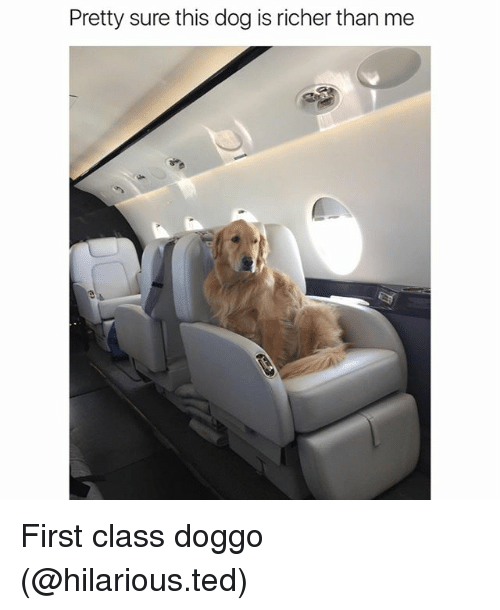 dogging: Pretty sure this dog is richer than me First class doggo (@hilarious.ted)