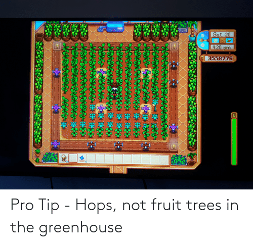 hops: Pro Tip - Hops, not fruit trees in the greenhouse
