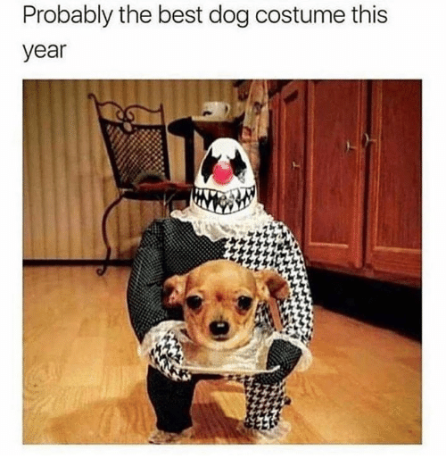 Best Dog: Probably the best dog costume this  year