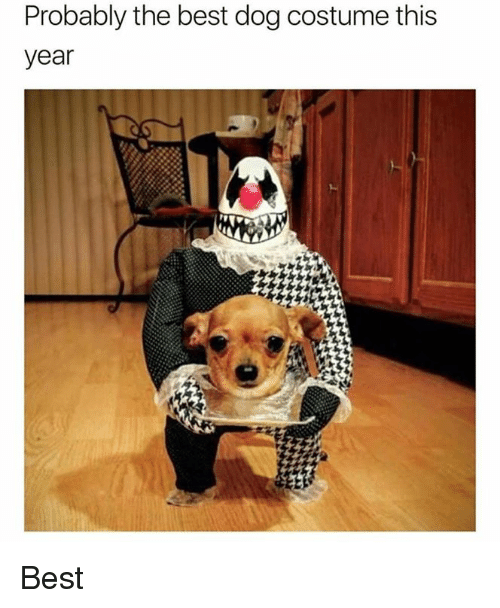 Memes, Best, and 🤖: Probably the best dog costume this  year Best