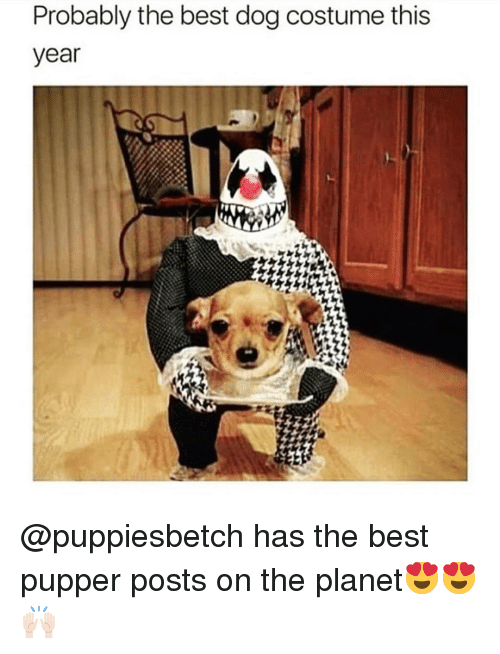 Funny, Best, and Dog: Probably the best dog costume this  year @puppiesbetch has the best pupper posts on the planet😍😍🙌🏻