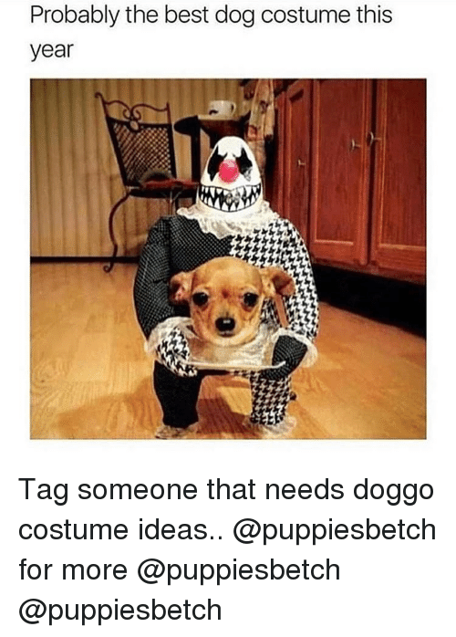 Best Dog: Probably the best dog costume this  year Tag someone that needs doggo costume ideas.. @puppiesbetch for more @puppiesbetch @puppiesbetch