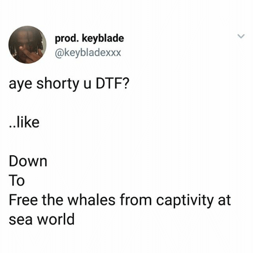 Dtf, Memes, and Free: prod. keyblade  @keybladexxx  aye shorty u DTF?  ..like  Down  To  Free the whales from captivity at  sea world