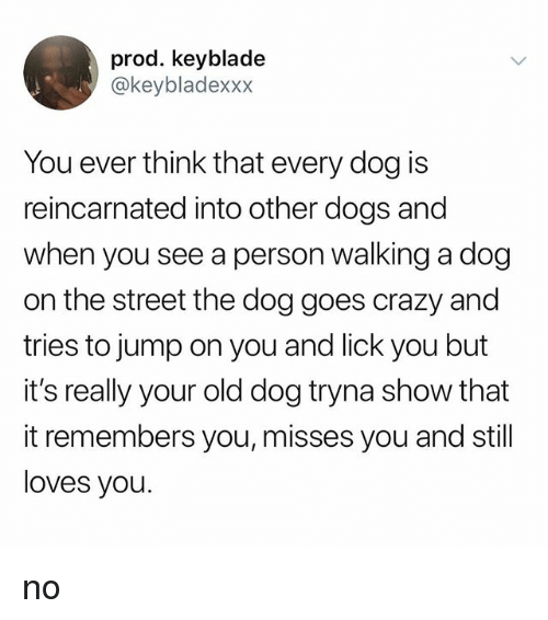Crazy, Dogs, and Old: prod. keyblade  @keybladexxx  You ever think that every dog is  reincarnated into other dogs and  when you see a person walking a dog  on the street the dog goes crazy and  tries to jump on you and lick you but  it's really your old dog tryna show that  it remembers you, misses you and still  loves you. no