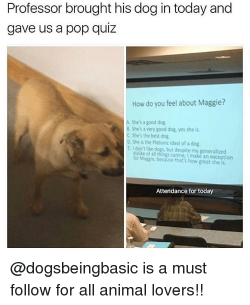 Dogs, Memes, and Pop: Professor brought his dog in today and  gave us a pop quiz  How do you feel about Maggie?  A. She's a good dog  & She's a very good dog, yes she is  C Shes the best dog  D She is the Platonic ideal of a dog.  E Idon't like dogs, but despite my generalized  dislike of all things canine, I make an exception  for Magsie, because that's how great she is  Attendance for today @dogsbeingbasic is a must follow for all animal lovers!!