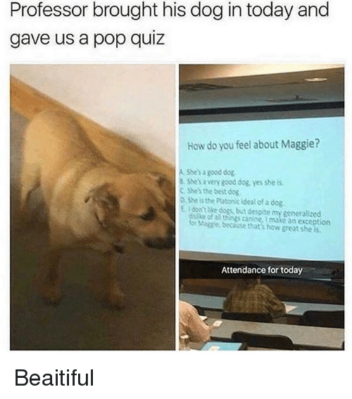 Dogs, Memes, and Pop: Professor brought his dog in today and  gave us a pop quiz  How do you feel about Maggie?  A She's a good dog  8 Shes a very sood dog yes she is  C Shes the best dog  o she is the Plotonic ideal of a dog  E. tdont Ake dogs, but despite my generalized  ke of al things canine, tmake an exception  e Magsie, because that's how great she is  Attendance for today Beaitiful