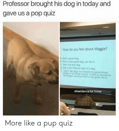 Best Dog: Professor brought his dog in today and  gave us a pop quiz  How do you feel about Maggie?  A She's a good dog  She's a very good dog yes she is  CShe's the best dog  0 She is the Platonic ideal of a dog  Eon't ke dogs but despite my generalized  diske of all things canine, I make an exception  for Mage because that's how great she is  Attendance for today More like a pup quiz