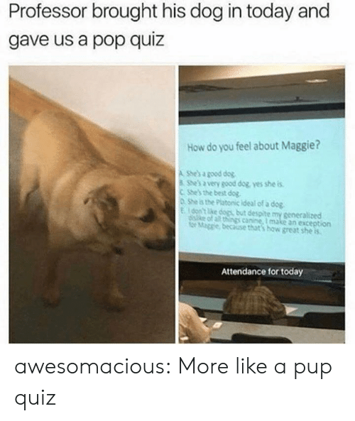 Best Dog: Professor brought his dog in today and  gave us a pop quiz  How do you feel about Maggie?  A She's a good dog  She's a very good dog yes she is  CShe's the best dog  0 She is the Platonic ideal of a dog  Eon't ke dogs but despite my generalized  diske of all things canine, I make an exception  for Mage because that's how great she is  Attendance for today awesomacious:  More like a pup quiz