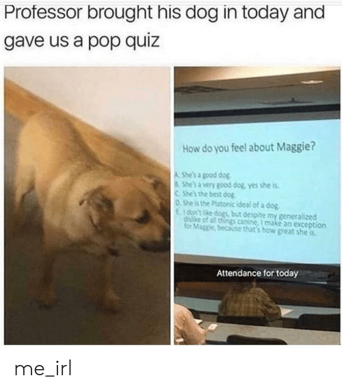 Best Dog: Professor brought his dog in today and  gave us a pop quiz  How do you feel about Maggie?  A She's a good dog  8 She's a very good dog, yes she is  CShe's the best dog  0She is the Platonic ideal of a dog.  E100n't ke dogs but despite my generalized  disike of all things canine, I make an exception  for Maggie, because that's how great she is  Attendance for today me_irl
