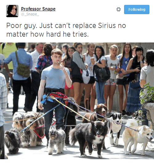 Sirius: Professor Snape  @_Snape  Following  Poor guy. Just can't replace Sirius no  matter how hard he trioes.