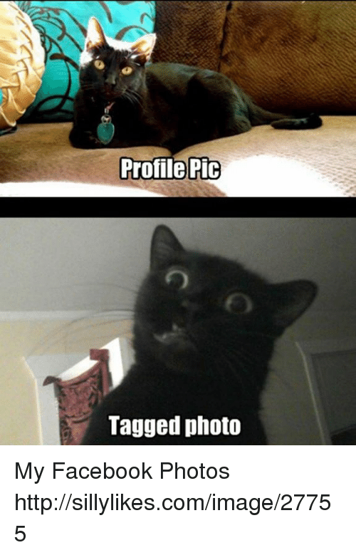 Memes, 🤖, and Photos: Profile Pic  Tagged photo My Facebook Photos http://sillylikes.com/image/27755