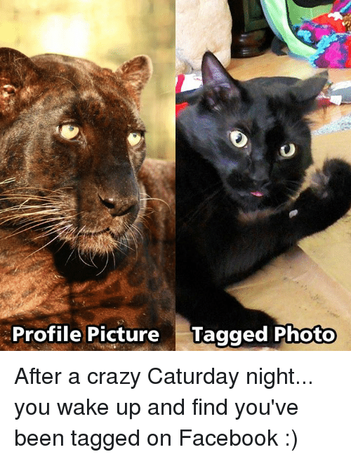 Caturday, Crazy, and Facebook: Profile Picture  Tagged Photo After a crazy Caturday night... you wake up and find you've been tagged on Facebook :)