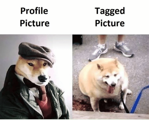 Memes, Tagged, and Tagged Picture: Profile  Picture  Tagged  Picture