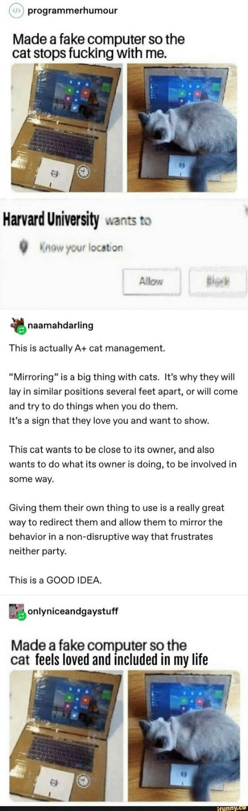 """Life Funny: programmerhumour  Made a fake computer so the  cat stops fucking with me.  Harvard University wants to  Know your location  Allow B  naamahdarling  This is actually A+ cat management.  """"Mirroring"""" is a big thing with cats. It's why they will  lay in similar positions several feet apart, or will come  and try to do things when you do them  It's a sign that they love you and want to show.  This cat wants to be close to its owner, and also  wants to do what its owner is doing, to be involved in  some way  Giving them their own thing to use is a really great  way to redirect them and allow them to mirror the  behavior in a non-disruptive way that frustrates  neither party.  This is a GOOD IDEA.  onlyniceandgaystuff  Made a fake computer so the  cat feels loved and included in my life  funny"""