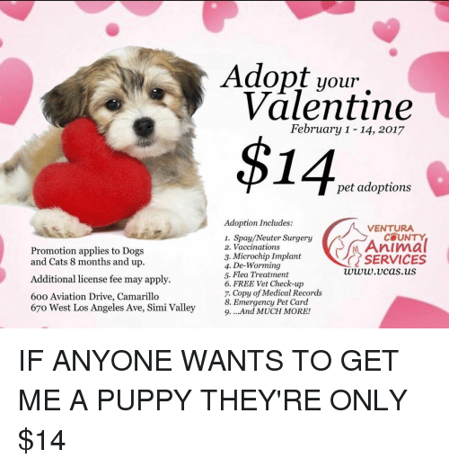 Aviators: Promotion applies to Dogs  and Cats 8 months and up.  Additional license fee may apply.  60o Aviation Drive, Camarillo  67o West Los Angeles Ave, Simi Valley  Adopt your  Valentine  February 1-14, 2017  $14  pet adoptions  Adoption Includes:  VENTURA  1. Spay/Neuter Surgery  Animal  2. Vaccinations  3. Microchip Implant  SERVICES  4. De-Worming  www.v cas.uS  5. Flea Treatment  6. FREE Vet Check-up  7. Copy of Medical Records  8. Emergency Pet Card  9. ...And MUCH MORE! IF ANYONE WANTS TO GET ME A PUPPY THEY'RE ONLY $14