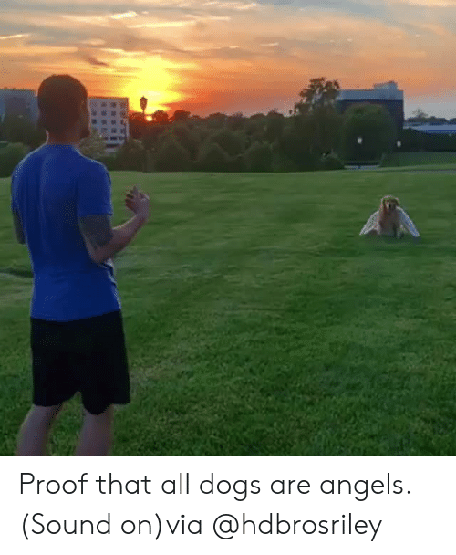 all dogs: Proof that all dogs are angels. (Sound on)via@hdbrosriley