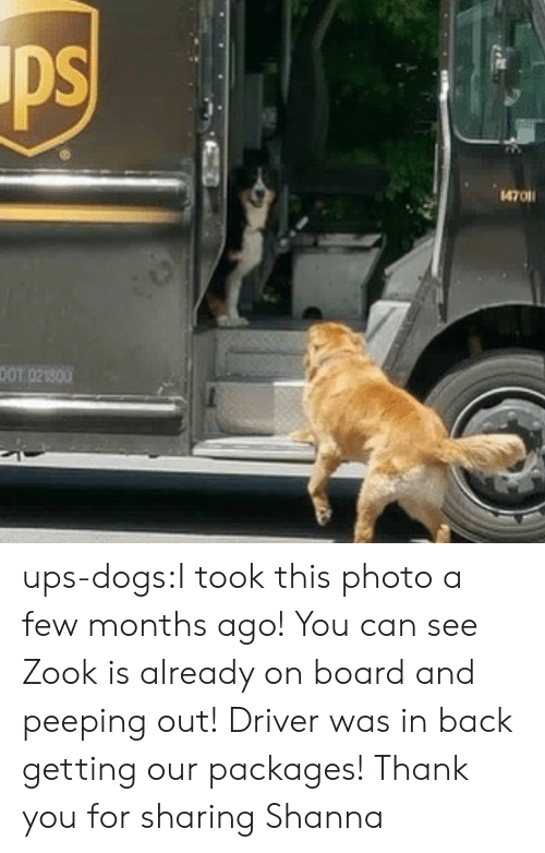 packages: ps  4701  DOT 021800 ups-dogs:I took this photo a few months ago! You can see Zook is already on board and peeping out! Driver was in back getting our packages! Thank you for sharing Shanna