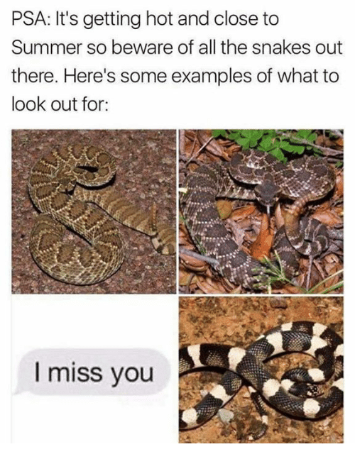 psa: PSA: It's getting hot and close to  Summer so beware of all the snakes out  there. Here's some examples of what to  look out for  I miss you