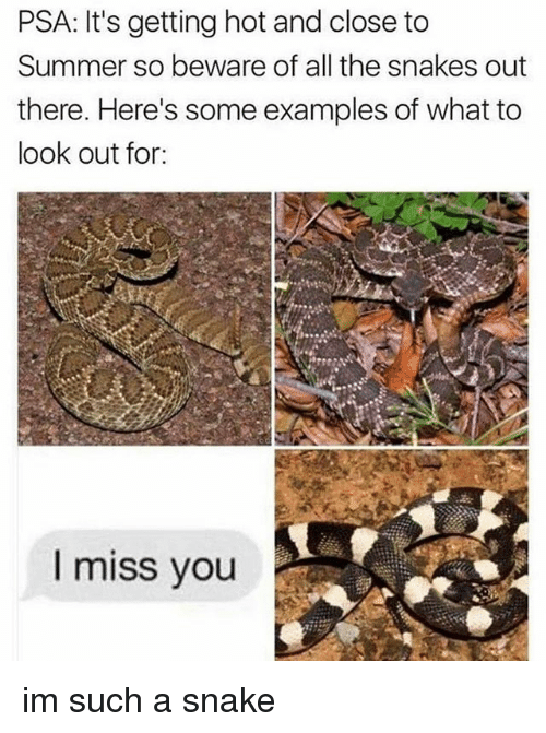 Snake: PSA: It's getting hot and close to  Summer so beware of all the snakes out  there. Here's some examples of what to  look out for:  miss you im such a snake