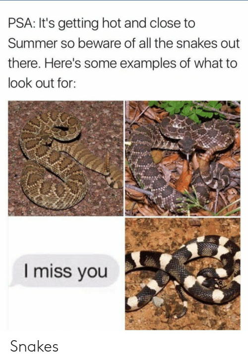 psa: PSA: It's getting hot and close to  Summer so beware of all the snakes out  there. Here's some examples of what to  look out for:  I miss vou Snakes