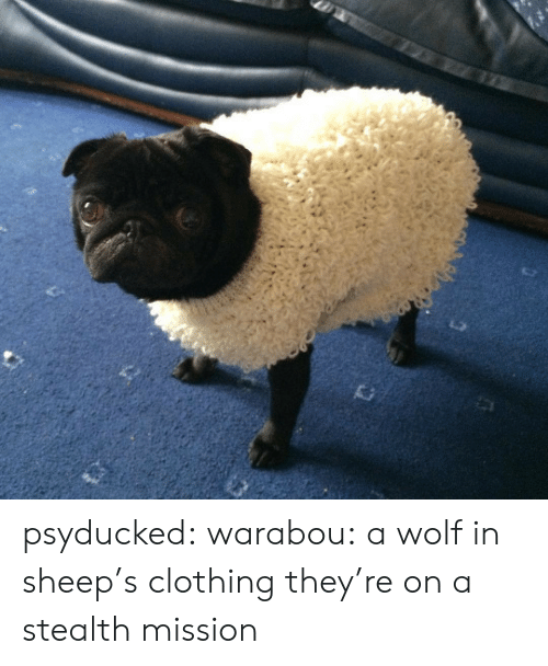 Wolf: psyducked:  warabou:  a wolf in sheep's clothing  they're on a stealth mission