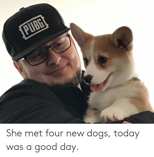 today was a good day: PUBG She met four new dogs, today was a good day.