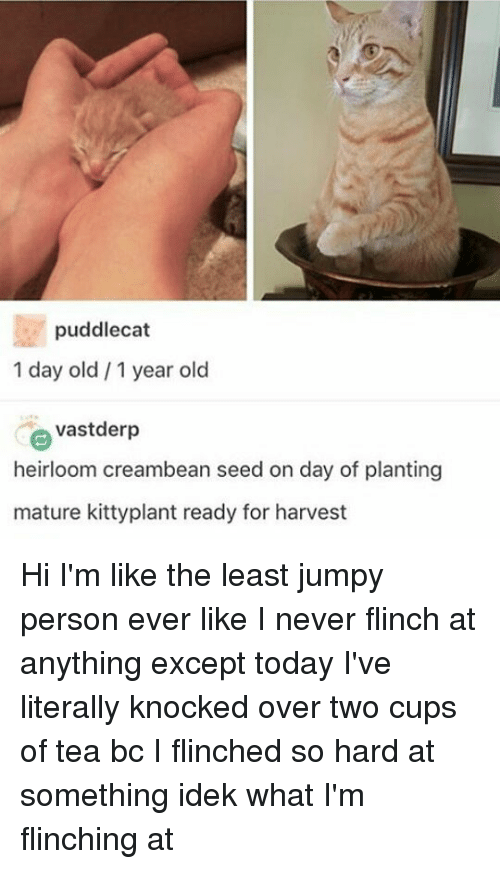 Memes, Today, and Old: puddlecat  1 day old 1 year old  e vastderp  heirloom creambean seed on day of planting  mature kittyplant ready for harvest Hi I'm like the least jumpy person ever like I never flinch at anything except today I've literally knocked over two cups of tea bc I flinched so hard at something idek what I'm flinching at