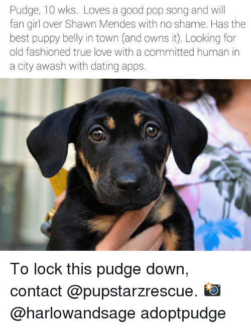 Dating, Love, and Memes: Pudge, 10 wks. Loves a good pop song and will  fan girl over Shawn Mendes with no shame. Has the  best puppy belly in town (and owns it. Looking for  old fashioned true love with a committed human in  a city awash with dating apps. To lock this pudge down, contact @pupstarzrescue. 📸@harlowandsage adoptpudge