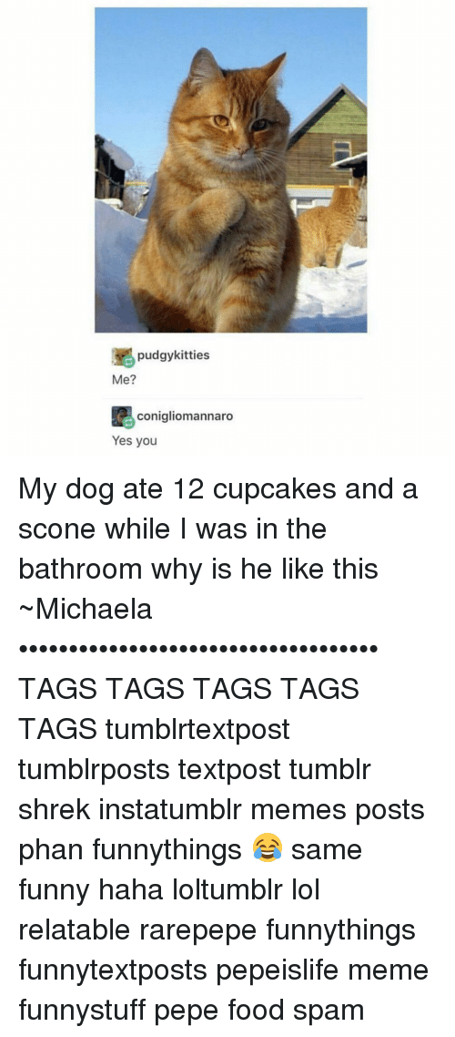 yes-you: pudgykitties  Me?  conigliomannaro  Yes you My dog ate 12 cupcakes and a scone while I was in the bathroom why is he like this ~Michaela •••••••••••••••••••••••••••••••••••• TAGS TAGS TAGS TAGS TAGS tumblrtextpost tumblrposts textpost tumblr shrek instatumblr memes posts phan funnythings 😂 same funny haha loltumblr lol relatable rarepepe funnythings funnytextposts pepeislife meme funnystuff pepe food spam