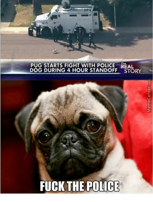 Dogs, Fuck the Police, and Police: PUG STARTS FIGHT WITH POLICE The  DOG DURING 4 HOUR STANDOFF STORY  FUCK THE POLICE
