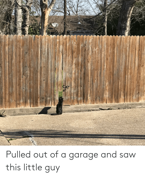 Pulled Out: Pulled out of a garage and saw this little guy