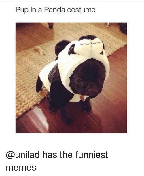 Funny, Memes, and Panda: Pup in a Panda costume @unilad has the funniest memes