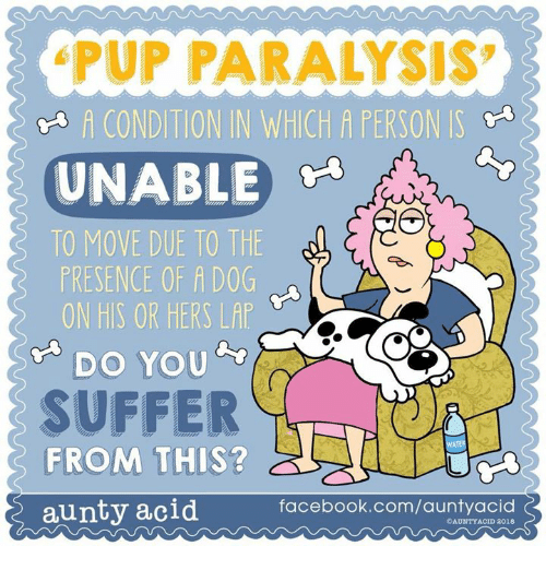 Facebook, Memes, and facebook.com: PUP PARALYSIS  A CONDITION IN WHICH A PERSON IS  ~  UNABLE  TO MOVE DUE TO THE  PRESENCE OF A DOG  ON HIS OR HERS LAP  DO YOu  SUFFER  FROM THIS?  aunty acid  facebook.com/auntyacid  OAUNTYACID 2018