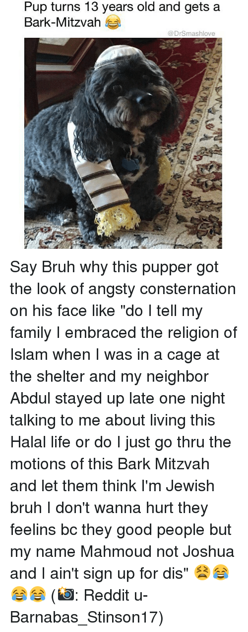 """Bruh, Family, and Life: Pup turns 13 years old and gets a  Bark-Mitzvah  @DrSmashlove Say Bruh why this pupper got the look of angsty consternation on his face like """"do I tell my family I embraced the religion of Islam when I was in a cage at the shelter and my neighbor Abdul stayed up late one night talking to me about living this Halal life or do I just go thru the motions of this Bark Mitzvah and let them think I'm Jewish bruh I don't wanna hurt they feelins bc they good people but my name Mahmoud not Joshua and I ain't sign up for dis"""" 😫😂😂😂 (📸: Reddit u-Barnabas_Stinson17)"""