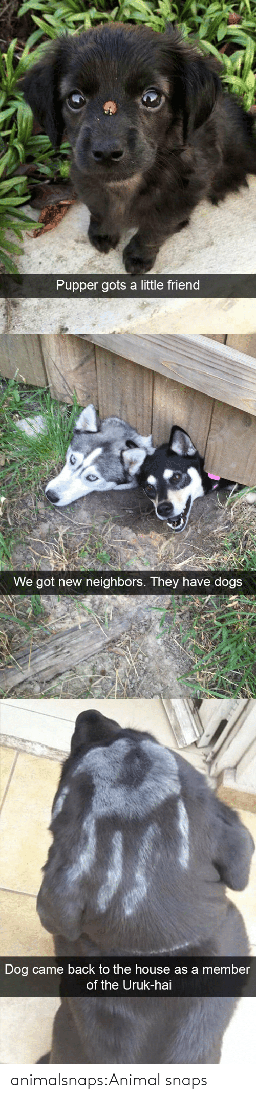 pupper: Pupper gots a little friend   We got new neighbors. They have dogs   Dog came back to the house as a member  of the Uruk-hai animalsnaps:Animal snaps