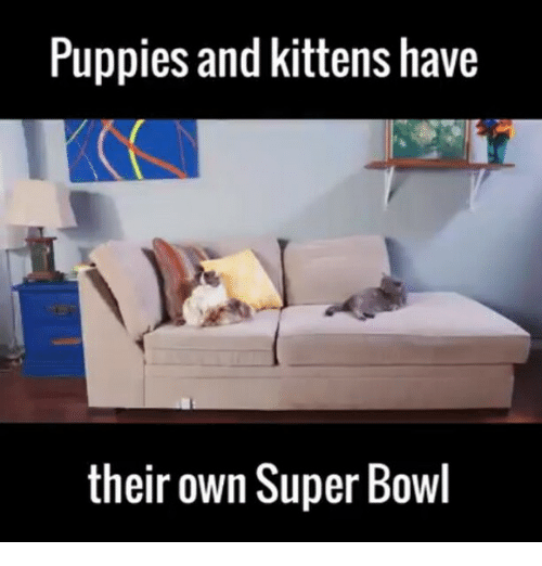 Puppies, Super Bowl, and Kittens: Puppies and kittens have  their own Super Bowl