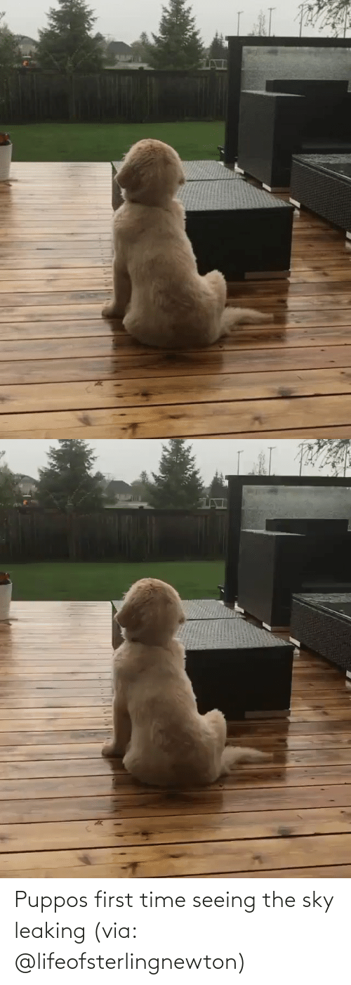 seeing: Puppos first time seeing the sky leaking (via: @lifeofsterlingnewton)
