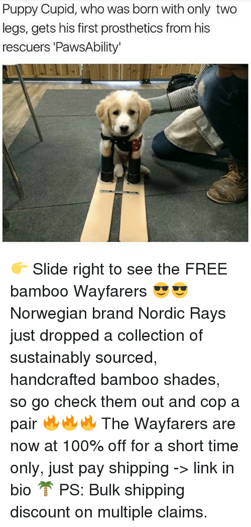 Cupid: Puppy Cupid, who was born with only two  legs, gets his first prosthetics from his  rescuers 'PawsAbility' 👉 Slide right to see the FREE bamboo Wayfarers 😎😎 Norwegian brand Nordic Rays just dropped a collection of sustainably sourced, handcrafted bamboo shades, so go check them out and cop a pair 🔥🔥🔥 The Wayfarers are now at 100% off for a short time only, just pay shipping -> link in bio 🌴 PS: Bulk shipping discount on multiple claims.