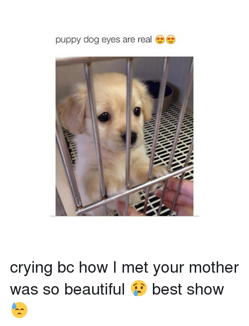 Girl Memes: puppy dog eyes are real crying bc how I met your mother was so beautiful 😢 best show 😓