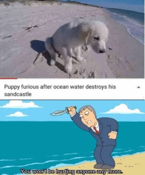furious: Puppy furious after ocean water destroys his  sandcastle  You won't be hurting anyone any more