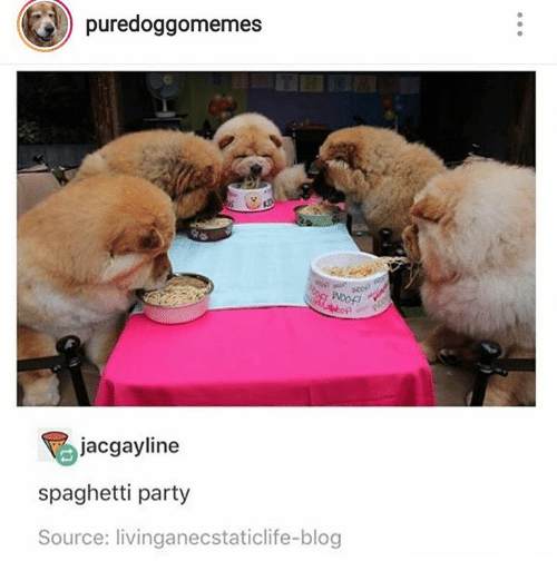 Party, Blog, and Spaghetti: puredoggomemes  jacgayline  spaghetti party  Source: livinganecstaticlife-blog