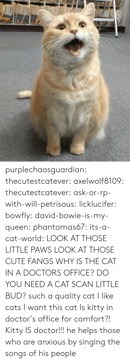 Scan: purplechaosguardian: thecutestcatever:  axelwolf8109:   thecutestcatever:   ask-or-rp-with-will-petrisous:  licklucifer:  bowfly:  david-bowie-is-my-queen:  phantomas67:  its-a-cat-world:  LOOK AT THOSE LITTLE PAWS  LOOK AT THOSE CUTE FANGS  WHY IS THE CAT IN A DOCTORS OFFICE?  DO YOU NEED A CAT SCAN LITTLE BUD?  such a quality cat  I like cats  I want this cat    Is kitty in doctor's office for comfort?!   Kitty IS doctor!!!  he helps those who are anxious by singing the songs of his people