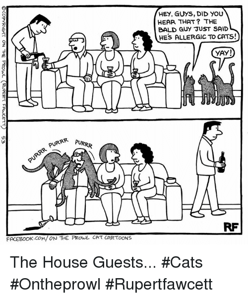 prowl: PURRR  PURR  FACEBOOK COM/ ON THE PROWL CAT CARTOONS  HEAR THAT THE  BALD GUY JUST SAID  HE's ALLERGIC To CATs!  YAY! The House Guests... #Cats #Ontheprowl #Rupertfawcett