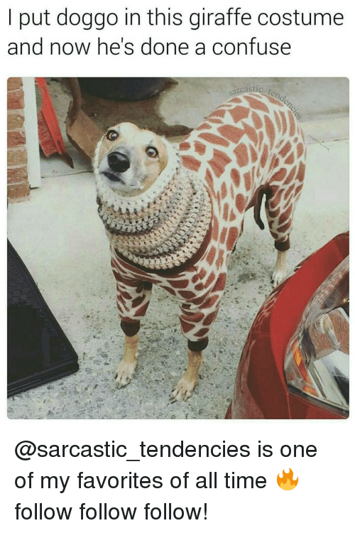 Memes, Time, and 🤖: put doggo in this giraffe costume  and now he's done a confuse  sarcastic  t @sarcastic_tendencies is one of my favorites of all time 🔥follow follow follow!
