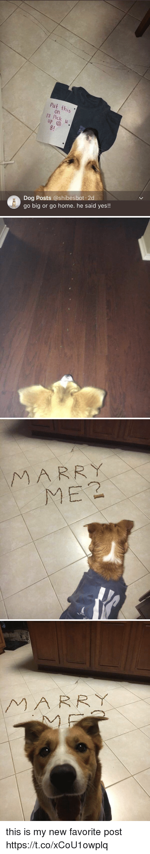 Home, Girl Memes, and Dog: Put this  on.  I'I  8!  Dog Posts @shibesbot 2  go big or go home. he said yes!!   MARR Y  ME2   MARRY this is my new favorite post https://t.co/xCoU1owplq