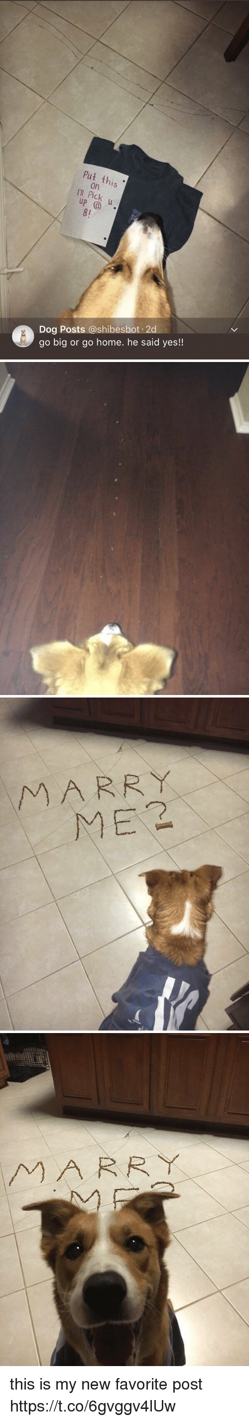 Home, Girl Memes, and Dog: Put this  on.  I'I  8!  Dog Posts @shibesbot 2  go big or go home. he said yes!!   MARR Y  ME2   MARRY this is my new favorite post https://t.co/6gvggv4lUw