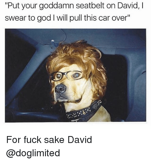 "Funny, God, and Fuck: ""Put your goddamn seatbelt on David, l  swear to god l will pull this car over"" For fuck sake David @doglimited"