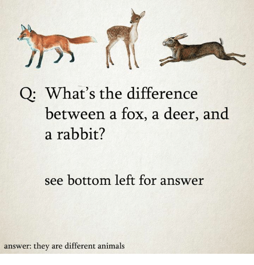 Bottoming: Q What's the difference  between a fox, a deer, and  a rabbit?  see bottom left for answer  answer: they are different animals
